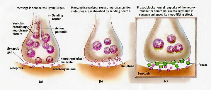 Viagra and prozac interaction
